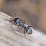 Why Leaders, Like Ants, Are Not One-Size-Fits-All